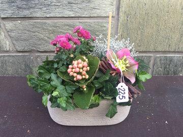 Potje vaste plant roze tinten