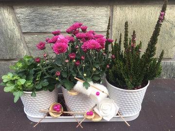 Compositie 3 plantjes roze tinten