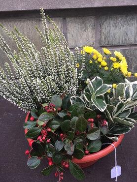 Compositie vaste plantjes (lang houdbaar)
