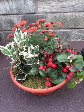 Compositie vaste plantjes (lang houdbaar) oranje - rood