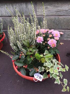 Compositie vaste plantjes (lang houdbaar) roze