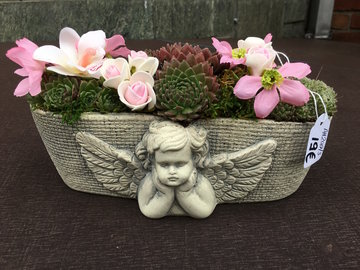3 - potje engel sempervivum roze