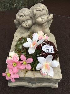 6 - engel boek sempervivum roze